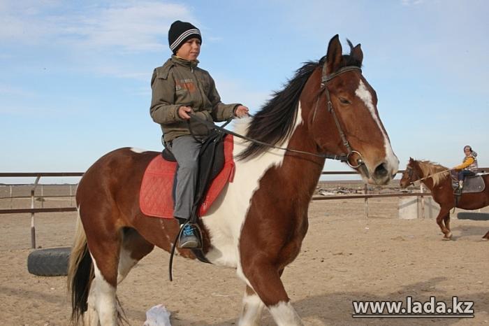 Хорошо гулять по полю с конем