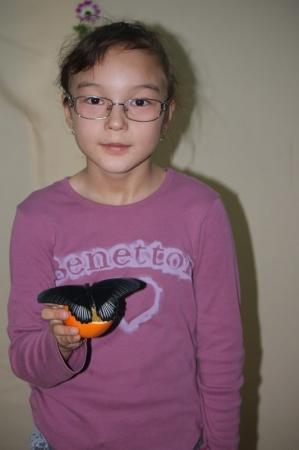 Выставка живых бабочек открылась в Актау