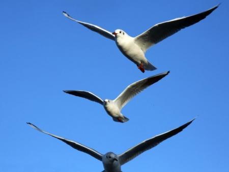Фотопост: Птицы Актау