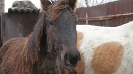 Казахстанец съедает 4 килограмма конины в год