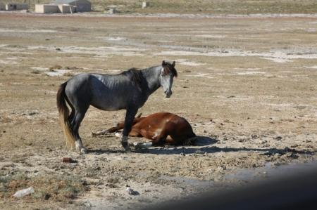 В результате наезда на животное на автотрассе Актау-Жанаозен пострадали два человека