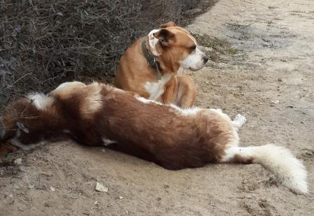 Собака сидит и плачет около другой собаки