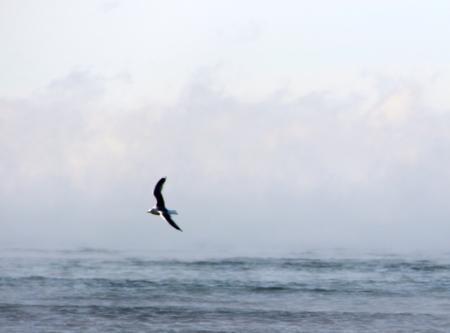 Каспий в январе. Фотопост