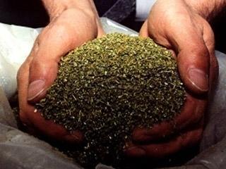 У жителя Актау изъяли гашиш и марихуану