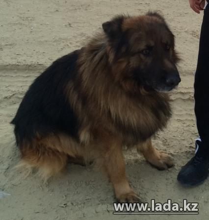 Помогите найти члена семьи, пропала собака.