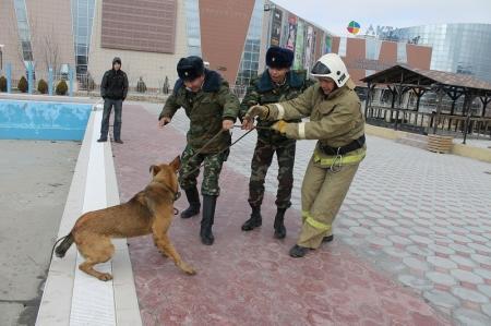 В Актау пожарные, вопреки обстоятельствам, спасли собаку, упавшую в бассейн на частной территории