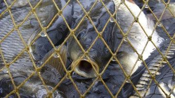 Пограничники освободили из браконьерских сетей свыше 200 живых рыб на Каспии