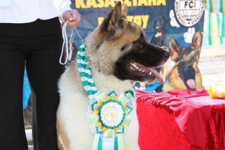 В Актау прошла выставка собак «Жемчужина Каспия»