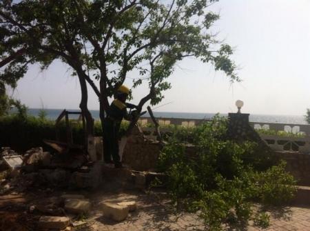 Возле кафе «Равиль» начали спиливать деревья. Online