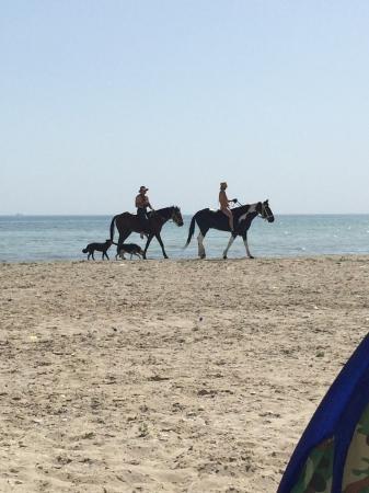 Смешались в кучу кони... люди...
