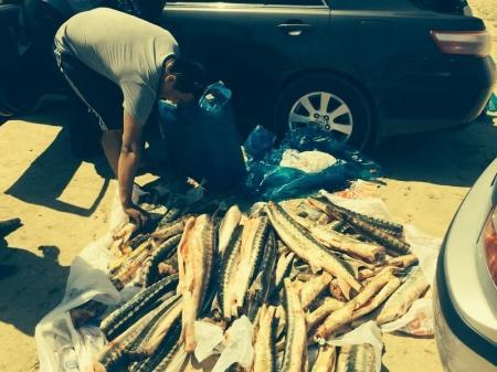 Жителя Мангистау задержали с 117 килограммами рыбы осетровых пород