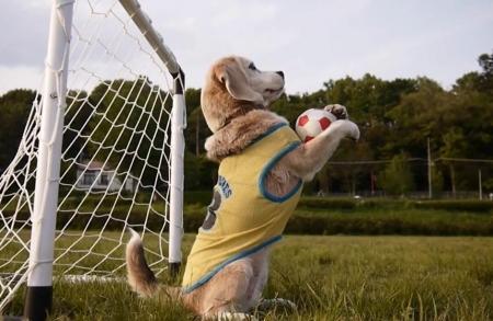 Собака-вратарь взорвала интернет