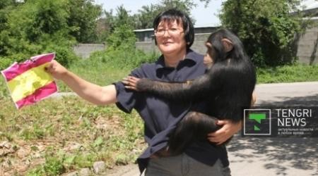 Победителя ЧМ-2014 предсказала обезьяна из зоопарка Алматы
