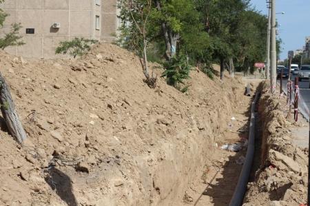 ТОО «Caspiy Operating»: В Актау деревья гибнут из-за халатности коммунальных служб