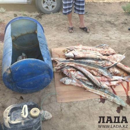Полицейские Актау задержали автомобиль с партией рыбы осетровых пород