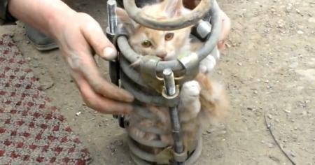 Кот проехал 70 километров в пружине амортизатора и остался жив