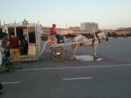 Лошадь на набережной