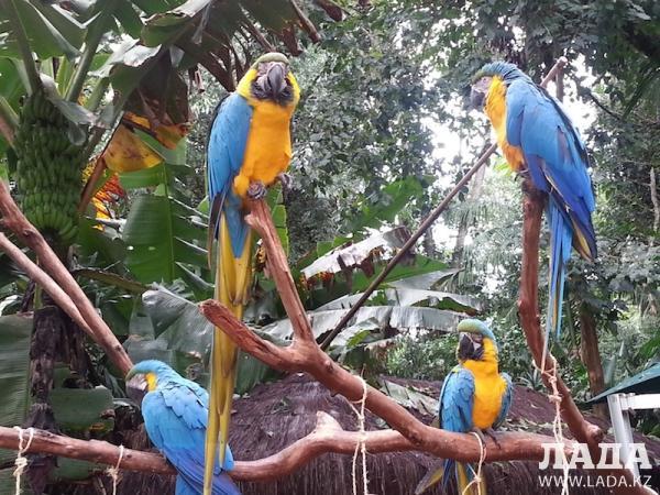 Бразильские дневники. Впечатления путешественников