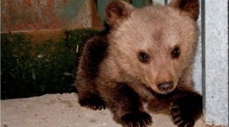 Уголовное дело по факту жестокого обращения с медвежонком в зоопарке Караганды прекращено