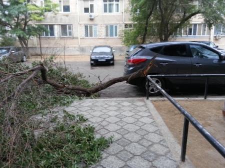 Cухие деревья
