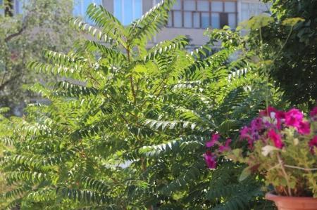 Зеленые насаждения внутри микрорайонов Актау будут обрабатывать по заявкам жителей