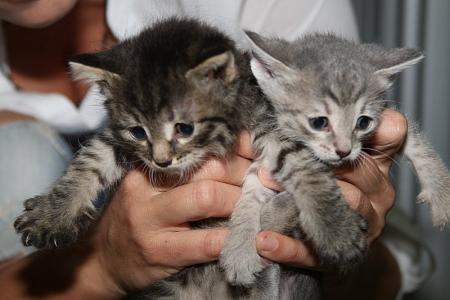 Ладные котята ищут себе хозяев
