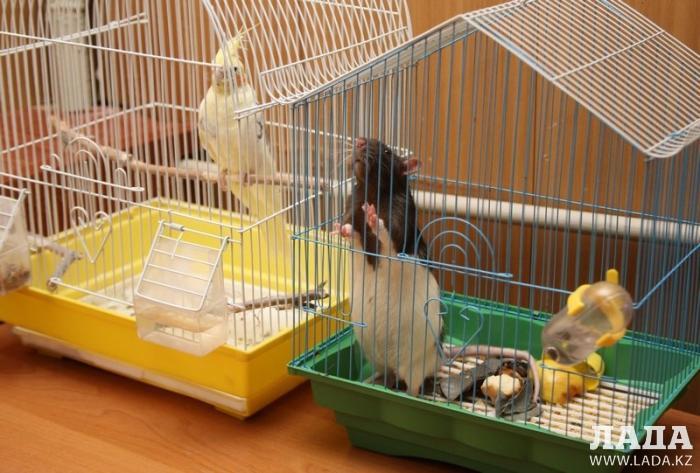 Птицы в клетке и кот «рецидивист»