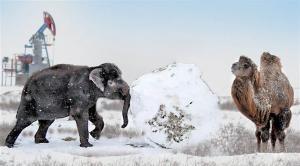 Экологи Казахстана предлагают разводить на Мангышлаке азиатских слонов