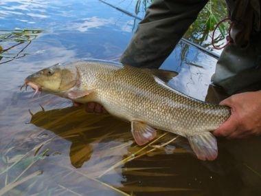 В Аральском море будут разводить рыб, занесенных в Красную книгу