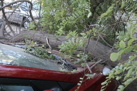 В Актау на капот автомобиля упало дерево