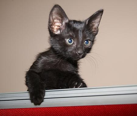«Ладная» кошечка ждет своих хозяев