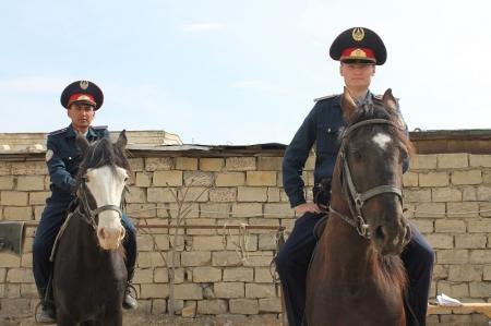 За Актау за последние сутки кавалерийский взвод доставил в загон около 60 бродячих лошадей