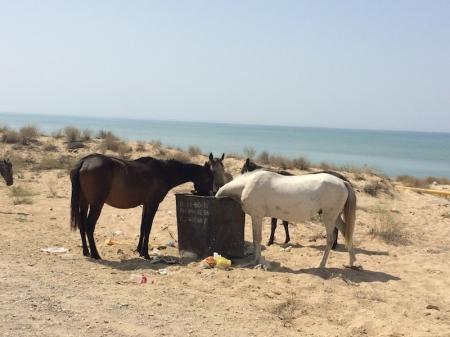 Лошади и помои