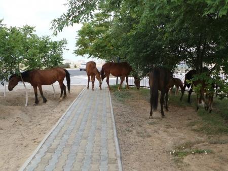 Лошади в городе. Почему бродячие животные ищут пропитание на помойках