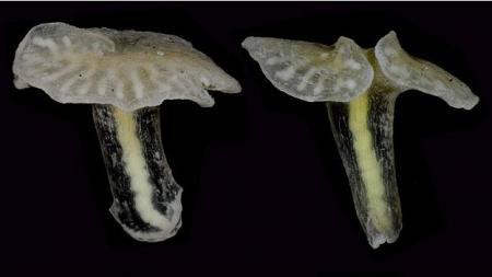 """Ученые нашли новую форму жизни - глубоководные """"грибы"""""""