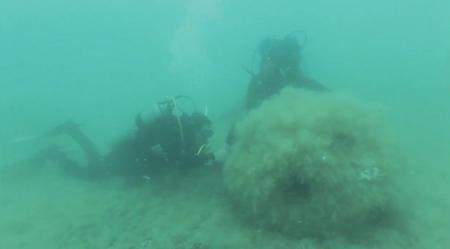 Владимир Родионов: Искусственные рифы оживят морскую флору мангистауского побережья Каспия