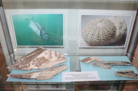 Актауским студентам показали окаменевшие останки древних животных