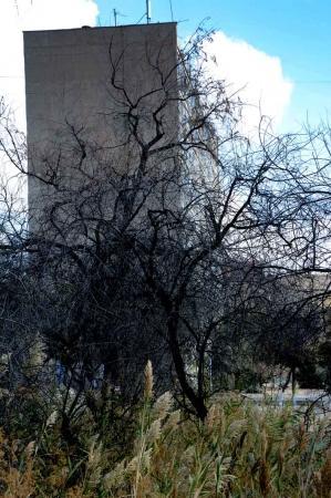Фотопост: Осень в актауском городском парке