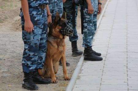 В дни празднования Курбан айт полиция будет работать в усиленном режиме