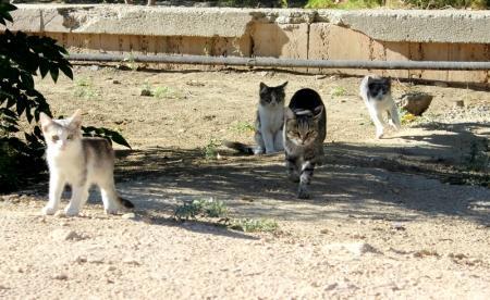 Бездомные животные Актау. Фотопост