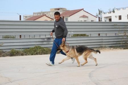 В Актау состоялась национальная выставка собак разных пород