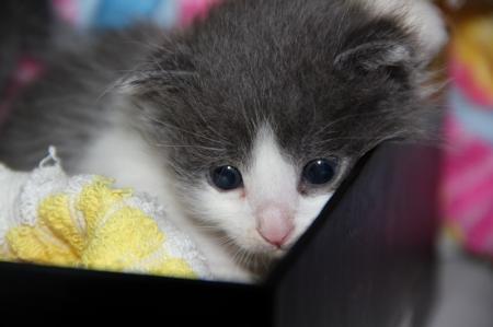 Любители кошек, спасайте!!!