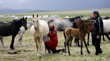 Омолаживающие продукты из кобыльего молока будут производить в Казахстане