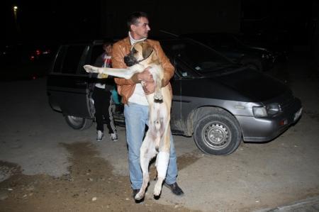 Как в Актау спасали собаку