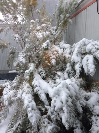 В Мангистау пришла зима