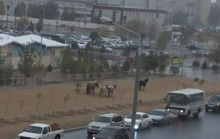 Лошади пошли на шопинг