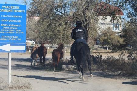В Актау на штрафную стоянку для животных отправили более сорока лошадей