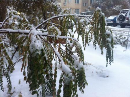 В Актау под тяжестью снега ломаются ветки деревьев
