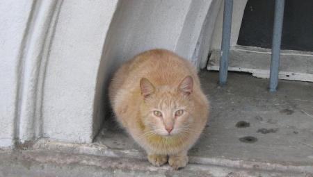 Кошка проникла в тюрьму Коми, пытаясь доставить два мобильника хозяину