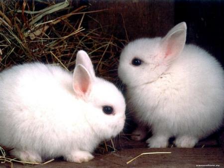 В Мангистау двух подростков задержали за кражу голубей, зайцев и кур